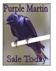 Purple Martin Sale