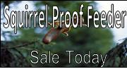 Squirrel Proof Feeder Sale