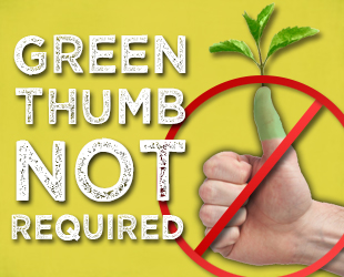 about brown thumb gardening
