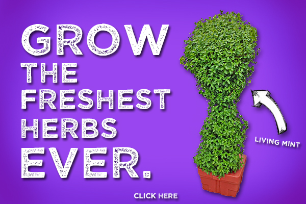 How About Growing the Freshest Herbs