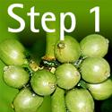 Natural Slim Sol Step1