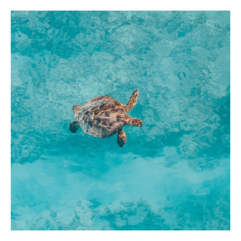 sea turtle - World Ocean Day