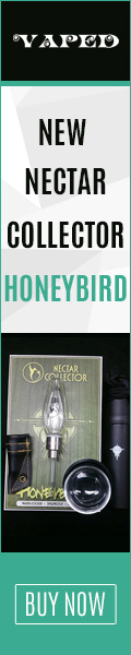 New Nectar Collector Honeybird