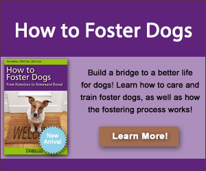 whole dog journal - foster