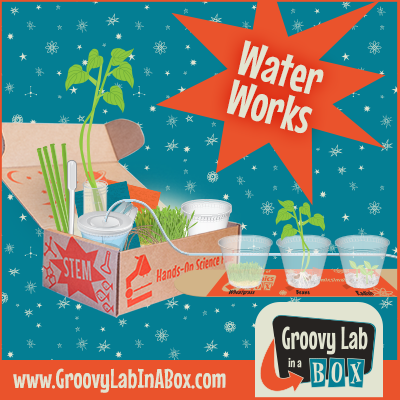 Water Works - A Lesson in Hydroponics