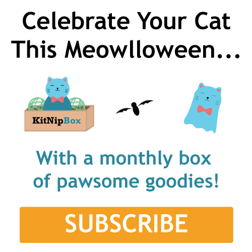 A monthly box of goodies for your cat!