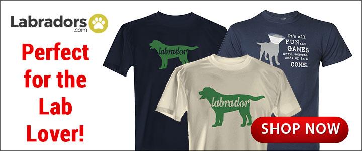 Labrador.com Spring Banners