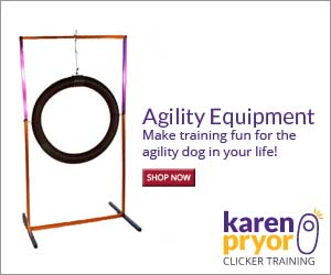Get all the tools you need from KPCT to make training fun and rewarding for the agility and sport-driven dog in your care!