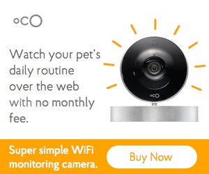 Oco Smart Pet Camera with Cloud Video Recording