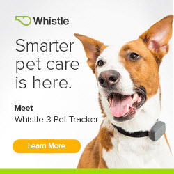 Stay connected to your pet with the Whistle Activity Monitor