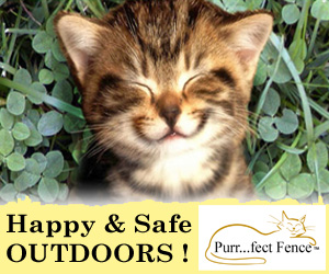 Purrfect Fence Keeps Cats Happy & Safe