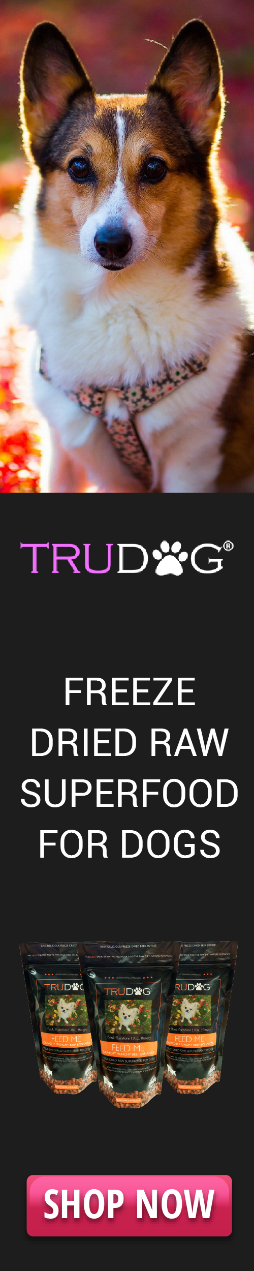 freeze driedraw superfood for dogs