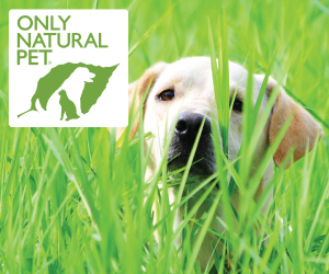 Inexpensive Natural Dog Supplements for your dog