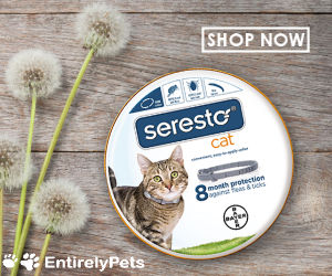 Buy Seresto Flea & Tick Collars for Cats and Dogs