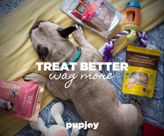 French Bulldog PupJoy Dog Subscription