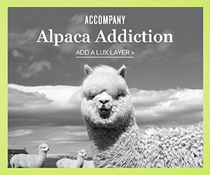 Accompany - Alpaca Addiction - Artisan Made, Fair Trade, Philanthropic