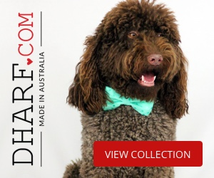 Designer Pet accessories