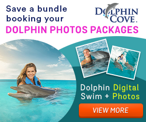 Dolphin Discoevery