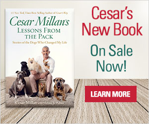 Lessons from the Pack by Cesar Millan