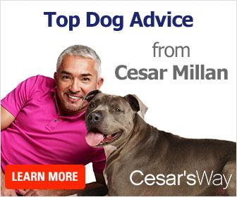 Top Dog Advice