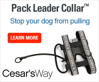 Pack Leader Dog Collar Review