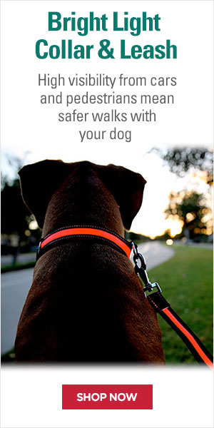 Bright Light Collar/Leash set adds safety to your nighttime walks by keeping your dog visible with the LED leash and collar.
