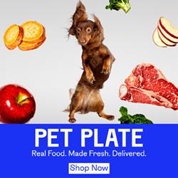 Best Dachshund Dog Food 1