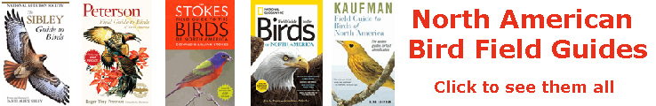 North American Bird Field Guides