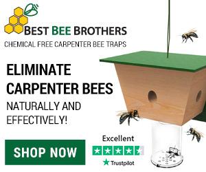 Eliminate Carpenter Bees!