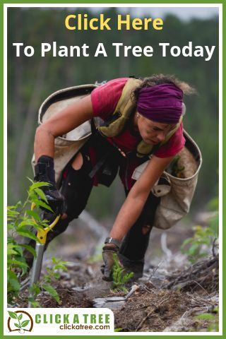 """image person planting a tree  """"Click here to plant a tree today"""" Click a tree"""