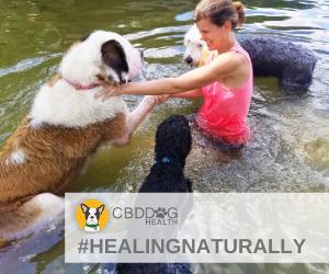 cod-dog-health