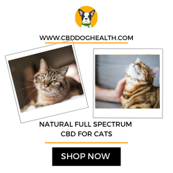 Natural Full Spectrum CBD Oil For Cats