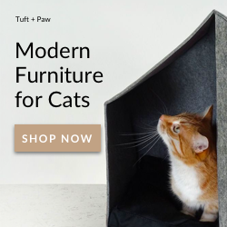 Modern Furniture For Cats