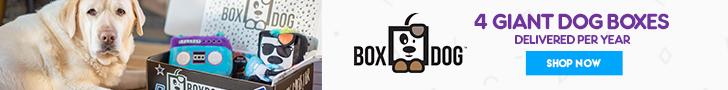 BoxDog