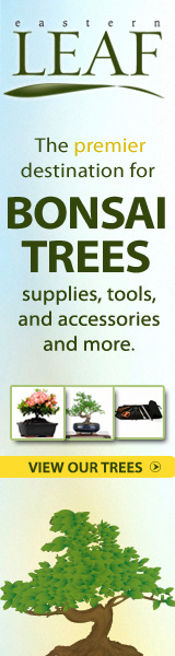 Eastern Leaf - Bonsai Trees, Tools and Supplies
