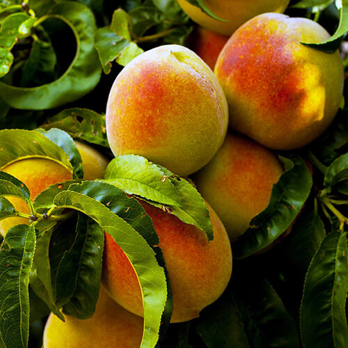Fredericksburg Farms Peach Products