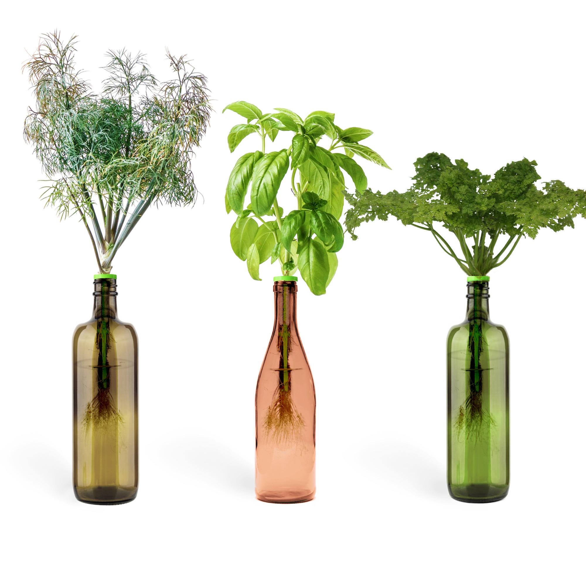 Urban Leaf Bottle Garden Culinary Classics
