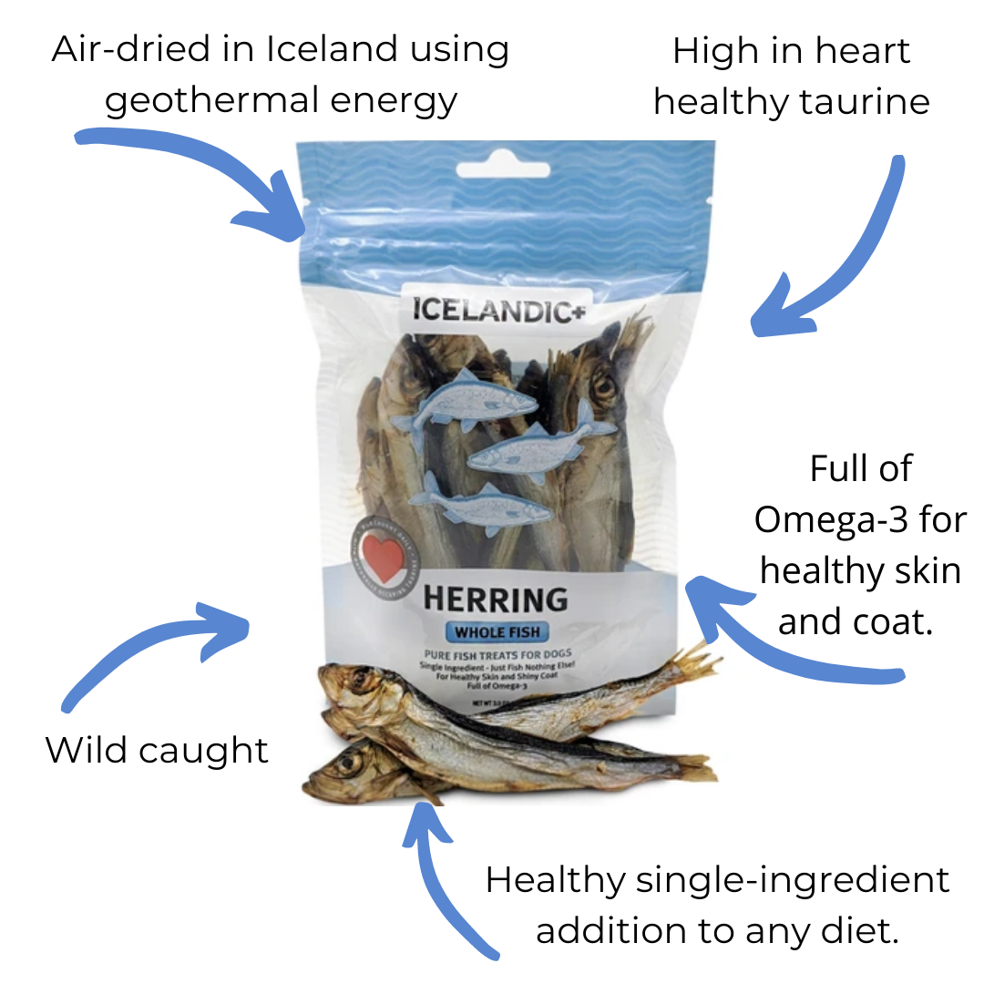 Icelandic+ Herring Whole Fish