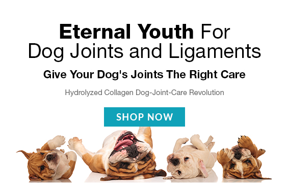 Dog Joints and Ligaments Care