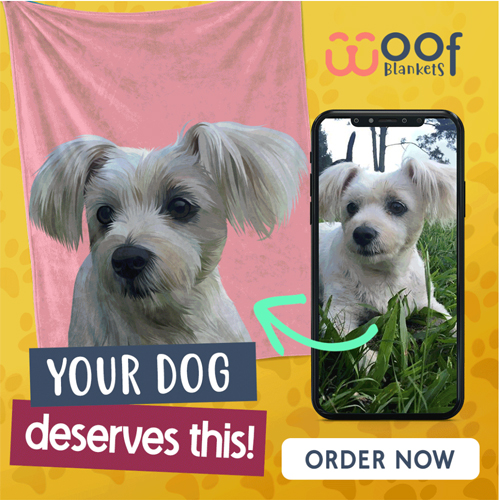 Your dog deserves this!