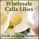 Wholesale Calla Lillies - Fresh Wedding Flowers
