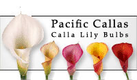 Click Here to Support The Garden Oracle with Your Purchases from Pacific Callas: Great Prices on Top Quality Flower Bulbs and Calla Lilies for Your Garden, Planters and Live Flower Arrangements!