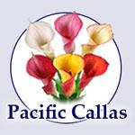 PacificCallas